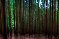 WaldV (Radek Lokos Fotografie) Tags: radeklokosfotografie landschaft reisen outdoor canon eos 6d freiburg wald blackforest schwarzwald mystic mystery