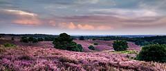Pink landscape (marielledevalk) Tags: sunset evening horizon clouds sky landscape pink color posbank holland veluwe