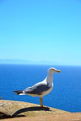 BlueBird (magverrier) Tags: corsica corse bonifacio falaise nikon nikond3200 oiseau mer bleu mouette goeland landscape