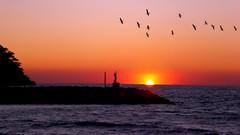 Night flight - Vol de nuit (GCau) Tags: gecau france provence sunset coucherdesoleil rouge red var birds oiseaux
