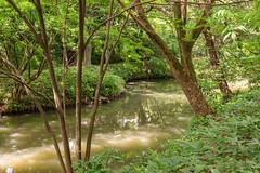 Paisible ruisseau (StephanExposE) Tags: japon japan tokyo rikugien parc jardin garden park eau water canon 600d 1635mm 1635mmf28liiusm arbre tree nature stephanexpose