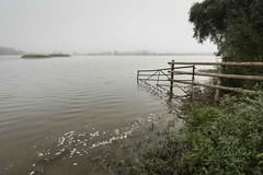 Dawn at Island Lake (DS Williams) Tags: islandlake godmanchester godmanchesternaturereserve bcn wildlifetrust
