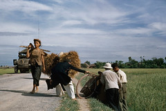 Robert Capa, May 1954 - Trn ng t Nam nh i Thi Bnh (manhhai) Tags: agriculture asian candidphotography colorphotography colour couleur day dedos ethnicstudies export extrieur exterior farm fminin fermeexploitationagricole fulllength groupofpeople groupe humanmigration internationalrelations manallages masculin matureadult namnh processed relationsinternationales vietnam viewfromrear womanallages youngadult