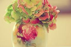 Macro Mondays Handle With Care (sarahellenspringer) Tags: macromondays handlewithcare vase flower rose hydrangea