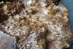 bumpy wood texture (lisafree54) Tags: bumpy lumpy bumps bark wood tree texture plant nature free freephotos cc0