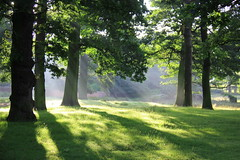 Early morning sun, Dunham Park (seentwistle) Tags: earlymorningsun dunhamparknationaltrust dunhammasseytreessun