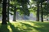 Early morning sun, Dunham Park (seentwistle) Tags: earlymorningsun dunhamparknationaltrust dunhammasseytreessun