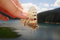 The butterfly (Eva Mijalkovic) Tags: wood summer mountain lake travelling butterfly day fingers montenegro summer2012