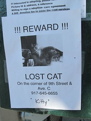 !!! REWARD !!! (neppanen) Tags: eastvillage newyork cat lost missing kitty reward lostcat kadonnut discounterintelligence sampen palkkio karannut