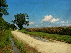 A Long and Winding Dirt Road with Fields of Dried Corn:  Northern Pitt County, North Carolina (EdgecombePlanter) Tags: road painterly rural painting nc corn dirt dirtroad mudpuddle driedcorn rurallandscape