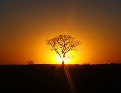 A Perfect End To a Perfect Day (osvaldoeaf) Tags: sunset brazil sky orange sun tree silhouette yellow brasil skyscape landscape dawn evening dry clear cerrado goinia gois