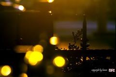 loneliness (alamond) Tags: light shadow sea sun canon fence is seaside branch loneliness bokeh 7d lone l usm ef isola izola 70300 llens f456