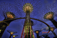 Gardens by the Bay, Singapore (Tony Glvez) Tags: gardens by canon de geotagged eos bay high singapore asia south east resolution alta guide singapur 2012 singapura guia gds cingapura resolucin 550d geolocated resoluao geolocalizada geoetiquetada geoposicionada geopositioned pasesotros