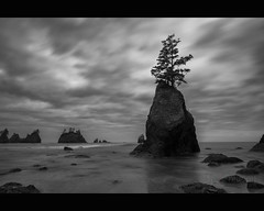 stand firm ([nosamk] KMason photography) Tags: ocean longexposure sky bw motion tree beach water clouds flow washington sand rocks surf waves unitedstates pacific shishi seastack clallambay pointofthearches ndx1000 nikonwideanglepcenikkor24mmf35ded