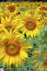 1Day-trip-Jim-Thompson-Farm&Dasada-Gallery_E12663461-025