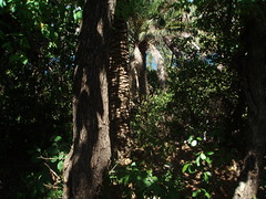 Go into the deepest of the deep woods (Monika Kostera (urbanlegend)) Tags: croatia dubrovnik dalmatia babinkuk