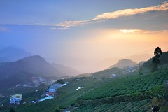 Foggy Tea Field @  (Vincent_Ting) Tags: sunset sky clouds taiwan  formosa  jiayi   seaofclouds alisan    teafield