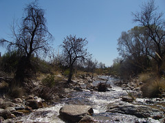 Sabino Creek (ToddStapleton) Tags: arizona southwest catalina desert tucson catalinamountains sabinocanyon santacatalinamountains santacatalina blackettsridge blackettsridgetrail toddstapleton sabinocanyonnationalrecreationarea