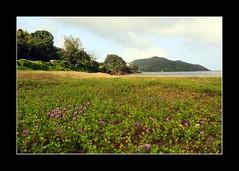 Vibrant Karwar beach (ramnath bhat) Tags: pink sea india green beach nature horizontal landscape hill maharashtra karnataka pune publication digitalphotography karwar stockphotography lanndscape canoneos5dmarkii editorialimages ramnathbhat ongettyforsale