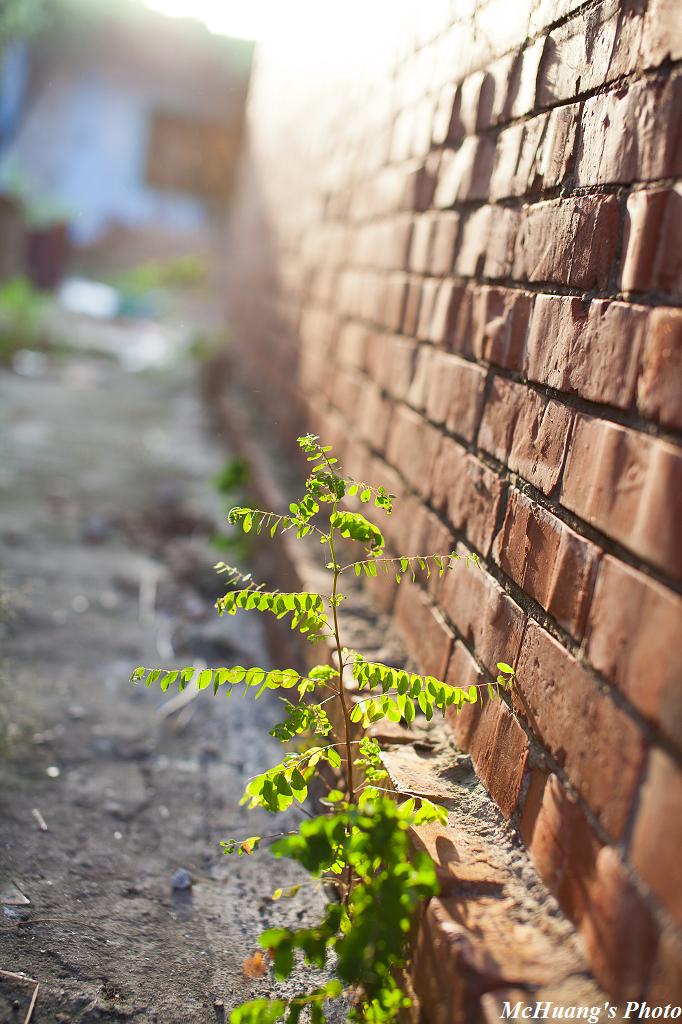 生活印象-菁寮老街