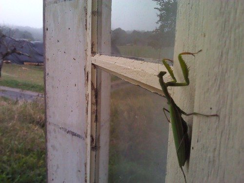 Reflections on a praying mantis