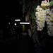2012 Cal Plans Woods Chardonnay Harvest 0017