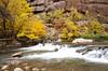 The Virgin River (Deby Dixon) Tags: travel autumn fall tourism nature outdoors photography utah nationalpark nikon hiking adventure zionnationalpark deby 2011 femalephotographer debydixon debydixonphotography