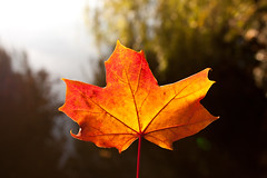 a leaf of gold