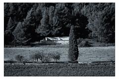 Auprès de mon arbre... [Explored 9-10-12] (Gabi Monnier) Tags: france automne canon landscape flickr rando jour provence paysage vignes ferme colline ruines provencealpescôtedazur roquefortlabédoule cyprés extérieur canoneos600d gabimonnier rouvières