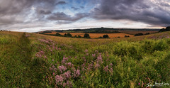Magdalen Hill (stewartl2010) Tags: other wideangle landscape colorefexpro4 meadow panorama evening bluesky countryside showerclouds stitchedpanorama hills summer magdalenhill hampshire nikfilters 180degree winchester brokenclouds uk field cityofwinchester england unitedkingdom gb