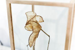 Red Light Pet Shop @ Schatjes Gallery (Waag Society) Tags: waagsociety schatjesgallerij amsterdam redlightdistrict petshop microbes popupstore experimental art science technology bacteria microorganisms biobank fungi openwetlab