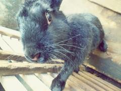 Coelha 2 (tatiana_castro) Tags: coelho animal natureza nature fofo cute bunny rabbit lovely