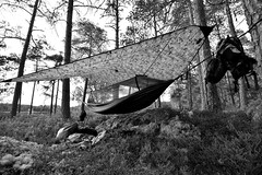 Norway and Sweden_134 (jjay69) Tags: hammock ddhammock basha shelter camping outdoors sleeping outdoor camp hammocks frontline frontlinehammock mosquitonet mosynet green forest forrest trees woods woodland scandanavia bushcraft active activity activeholiday northerneurope blackandwhite bw blackwhite monochrome artistic