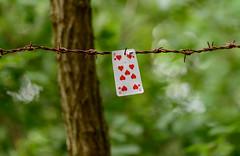 _G002225 (b.kunst17) Tags: nikon d800e tamron 150 600 wald zaun karte karten herz neun verwunschen kartentrick