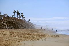 Misty Beach Morning, HB, CA (Anna_Heaton) Tags: beach huntingtonbeach dogbeach lifeguardtower palmtree