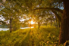 Set (patkelley3) Tags: rays sunset lake nature trees gold