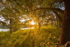 Set (patkelley3) Tags: rays sunset lake nature trees gold