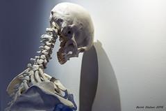 Kranium - The skull against the wall (Bernt Nielsen) Tags: skelet skeleton bone knogler cranium kraniun skull wall naturemorte