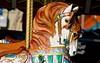 OC Fair Carousel Horses (Glenmore1971) Tags: carousel carouselhorse countyfair fairhorse woodenhorse