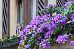 Elderly fabulous buganville (Davide Albonico ) Tags: davide albonico sirmione buganville garda lago lagodigarda gardalake lakeofgarda old elderly davidealbonico flower