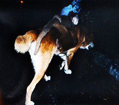 Monkey on the back of his adopted Mother  A DOG! (Sascha Grabow) Tags: saschagrabow ecuador animals funny curious curioso monkey affe dog hund perro chien latinamerica southamerica nature wildlife domesticanimals night outdoor outdoors ecuadorhighway