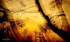 Gehe ins Licht.. (cornelia_auguste) Tags: lichtstimmung licht abendlicht sonnenuntergang sonnenstrahlen sogwirkung strahlung abendstimmung abendstunde abendsonne bume kreativ trume traumwelt outdoor dsseldorf