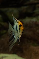 Acuario Agosto 2016 (55) (Fernando Soguero) Tags: acuario zaragoza acuariodezaragoza aragn turismo aquarium nikon d5000 fsoguero fernandosoguero