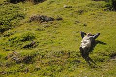 20160812_017_DennisWansink (Dennis Wansink) Tags: zoogdiervereniging larssoerink zomerkamp bergen jura vaud zwitserland ch