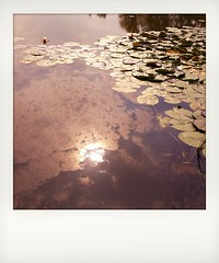 2016-08-25_04-42-51 (CamMonkeh) Tags: sun barnwelllake cambridge water lake lil reflections lg androidography android smartphone mobilephone polaroid fauxpolaroid clouds