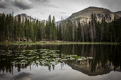 clouds and lilly pads (PhotographyBum) Tags: rocky mountain national park rmnp nps landscape wide outdoor cloudy reflections relfection colorado trees tree trail hike canon t2i 24mm