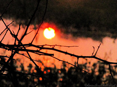 Sunset (droner_art) Tags: stem sun nature river leaves light effect photography stable grounds riverbed sunset naturephotography stimulating sanctimonious peaceful bharatpur bird sanctuary