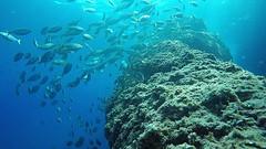 Immersioni al Faro (Umberto Ragni) Tags: sub dive faro portofino tortuga sommozzatori blue respect nature gopro goprohero4 immersioni