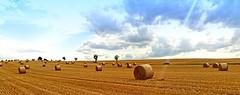 Summer and more.... (Tobi_2008) Tags: sommer summer himmel sky wolken clouds feld field sachsen saxony deutschland germany allemagne germania platinumheartaward