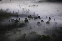 NCM10006-Upper Mississippi Forest Project (terracarbon) Tags: itascacounty minnesotaforests natureconservancy upmblandin aerial aerialview fog groundfog mists morningmists northernforest treesinfog neargrandrapids minnesota usa